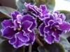 Грунт - основа отличного роста комнатных растений.