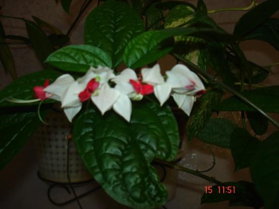 Комнатные цветы по алфавиту и названием и 19