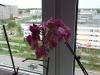 Очаровательное цветение орхидей