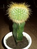 Помогите определить название кактуса.