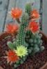 Полив кактусов в летний и зимний период.