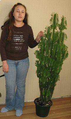 кактусы фото и названия фото