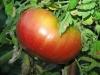 Помидоры: посадка, выращивание и сбор урожая