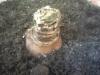 Посадка луковицы гиппеаструма