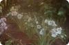 Орхидеи: цветочные аристократы пошли в народ