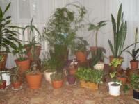 Как разместить растения?