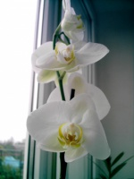 Чего боится орхидея