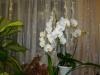 Почему болеют орхидеи