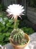 Правильный уход за кактусами