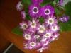 Новые цветочки -появились на 8 марта)))
