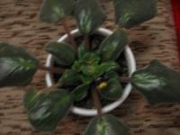 Как не дать заболеть всей коллекции растений