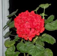Как оздоровить комнатное растение?