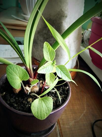 Сорняки в горшке с культурными растениями