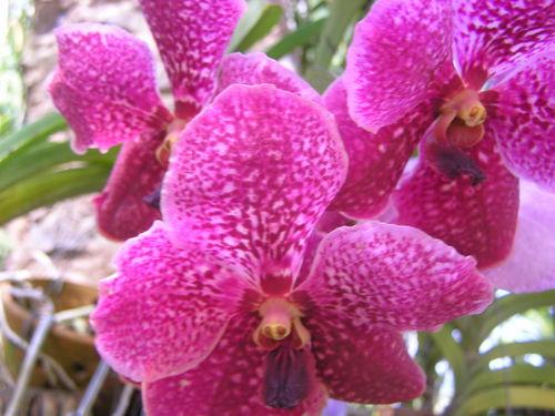 домашняя орхидея после цветения уход в домашних условиях