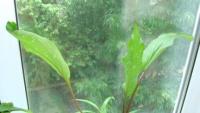 Зимовка для луковичных (калла, лилия)