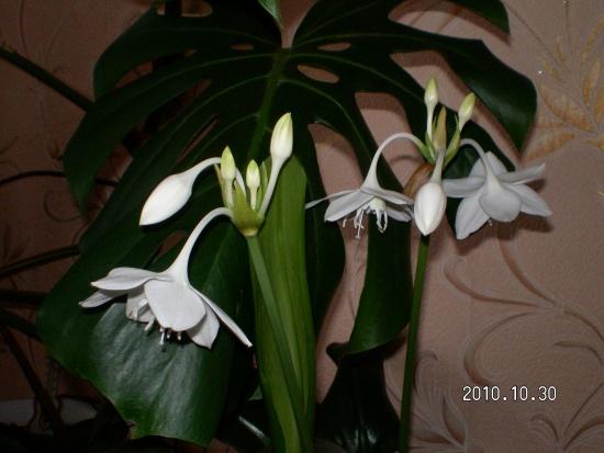 Цветы - фото обои для рабочего стола, картинки с цветами