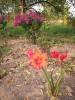 Валотта - в доме и в цветнике