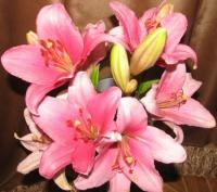 Мои любимые цветы-лилии!!!