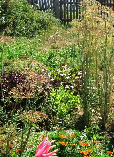 Рынок сад огород