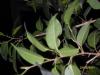 Отопительный сезон - как помочь растениям.