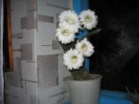 Сногзшибательный цветок кактуса