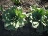 Уважаемые форумчане,помогите пожалуйста узнать растение