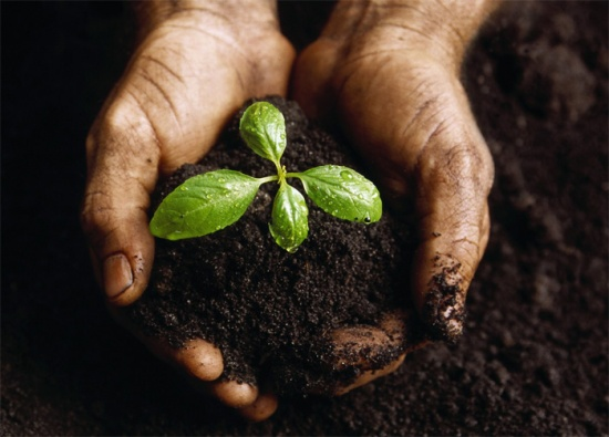 Комнатное растение и человек