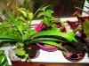 Пока они не цветут: сочетание декоративных листьев на окне