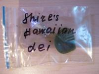 Транспортировка листовых черенков сенполий