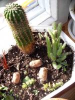 Обустройство «кактусариума»