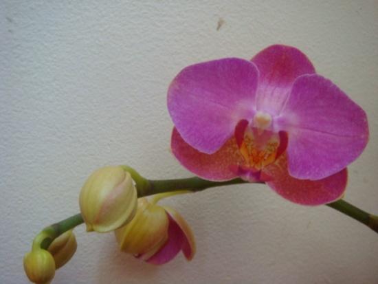 Желтеют цветы