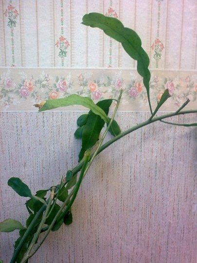 Помогите узнать - что это за растение и как за ним ухаживать