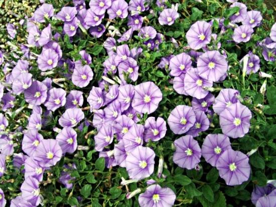 Вьющиеся растения прекрасный декор