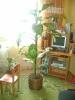 Наше домашнее дерево