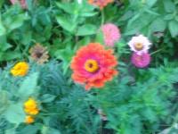 Осенние заботы цветовода.