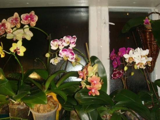 Без чего не будет успешной культуры орхидеи фаленопсис