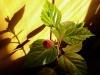 Создание цветочных композиций