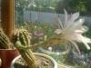 Выращивание кактуса