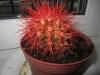 Помогите с кактусом