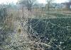 Как сажать и пересаживать виноград, вырастить из косточки