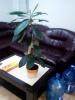 Помогите с названиями растений, пожалуйста!!!!!