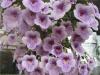 Комнатные растения – наши друзья или «молчаливые» враги?