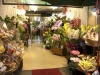 Покупаем комнатные растения в супермаркете: что нужно знать
