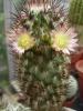 Размножение кактусов.