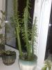 Мой смешной кактус