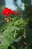 Комнатные растения против болезней