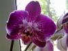Как я орхидею спасала.