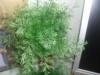 Растение которое пытается пылью