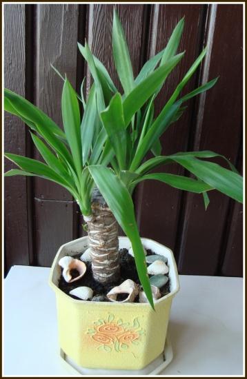 подкормка сладкой водой комнатные растения