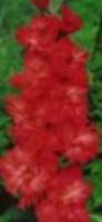 Оеннние заботы  цветовода